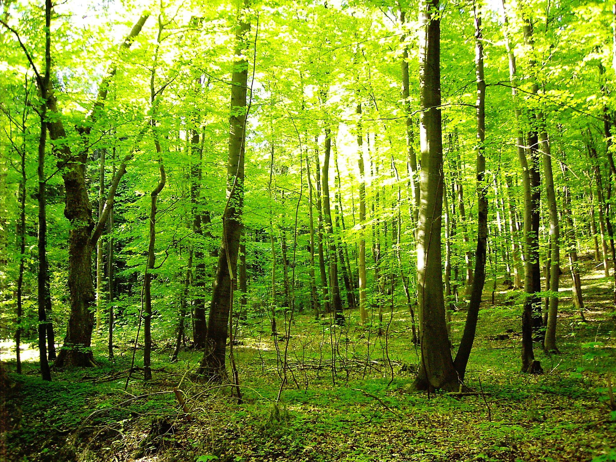 Waldbaden – oder achtsam spazieren gehen
