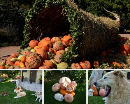 Herbst am Fuße der Pyrenäen
